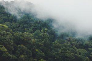 Read more about the article Adote um Parque: O programa que irá captar recursos para a Amazônia